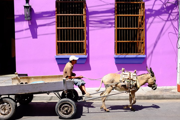 Man with donkey - Santa Marta, Colombia