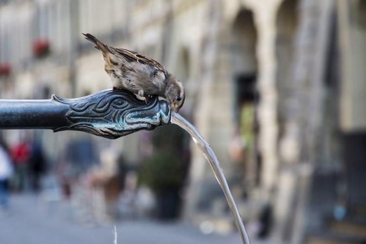 Fountains, Bern