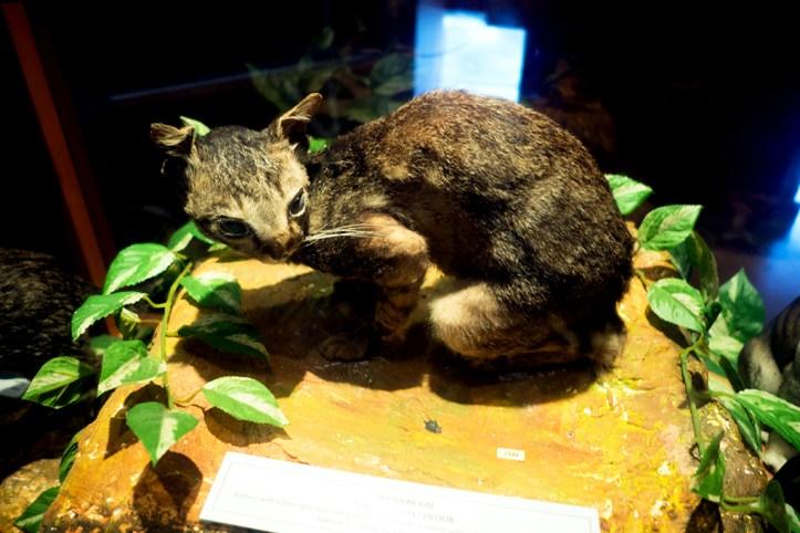 Exhibit at the Cat museum, Kuching