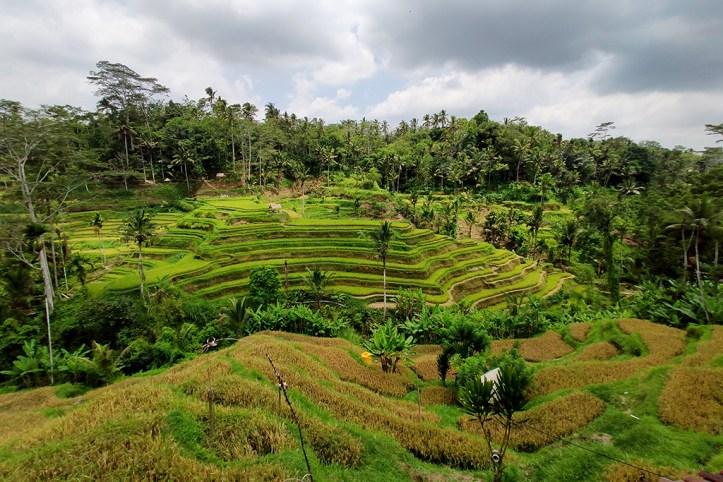 Tagalalang rice terraces, Ubud