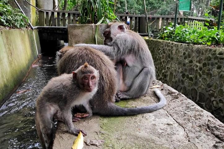 The Monkey Forrest, Ubud 3