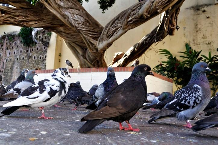 El Parque de las Palomas, San Juan