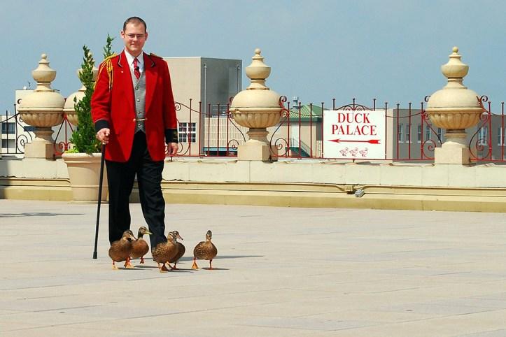 Peabody Duck Master, Memphis