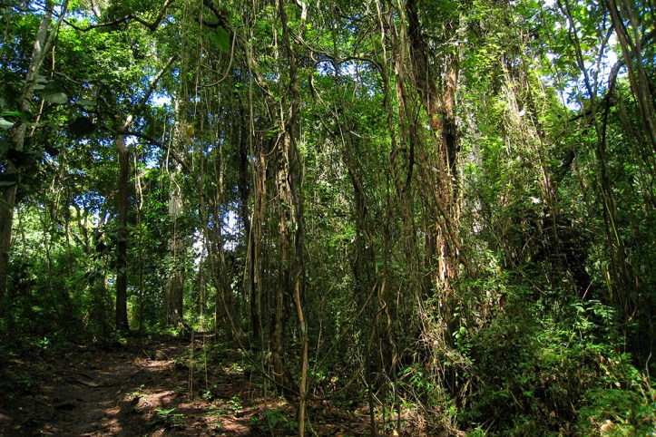 Parque Metropolitano, Panama City
