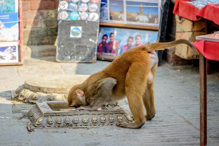 Swyambhunath Temple, Kathmandu