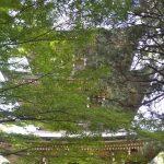 道場寺:イロハモミジの向こうに三重塔が見える