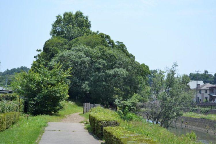 清瀬金山緑地公園入口(土の道)