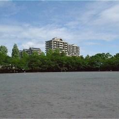 神無公園の運動広場。周囲にサクラが植えられている。
