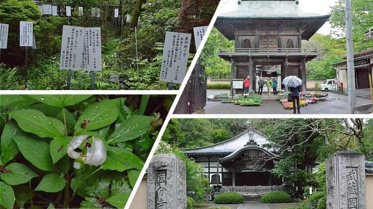武蔵国分寺・万葉植物園