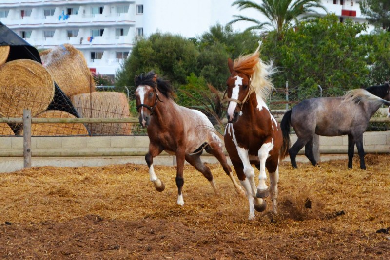 16 Things To Do In Alcudia, Mallorca (Ranxo Se Roques horse riding) - One Epic Road Trip
