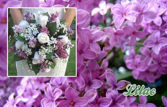 May Wedding Flowers, Lilac, Wisteria, Cherry Blossom
