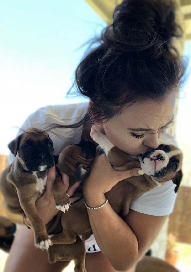 puppies 1