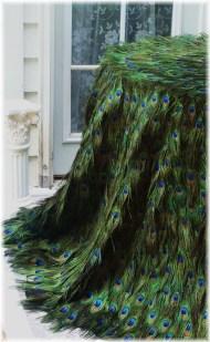 Pávatoll asztalterítő , Peacock feather tablecloth Forrás:http://www.etsy.com