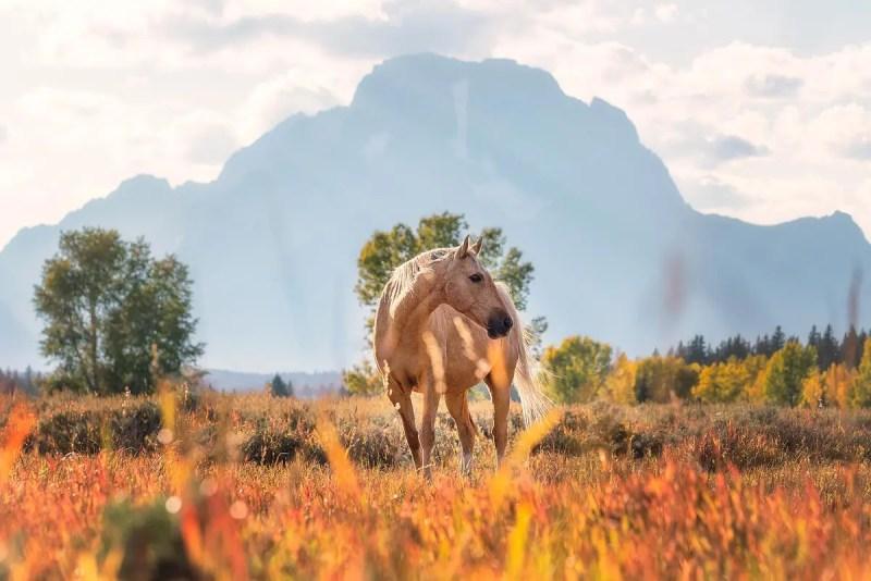 Horse at Elk Ranch Flats Grand Teton National Park Wyoming