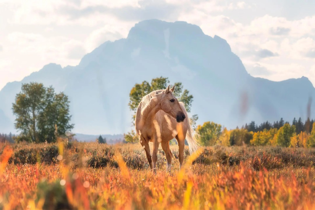 Grand Teton National Park Horse Wyoming