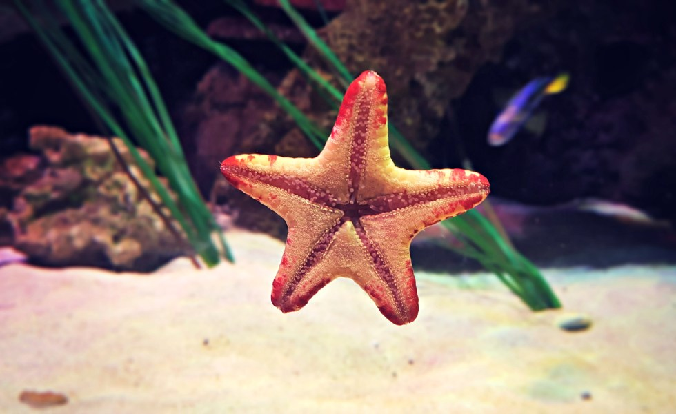 A Visit to Sea Life Manchester - One Frazzled Mum