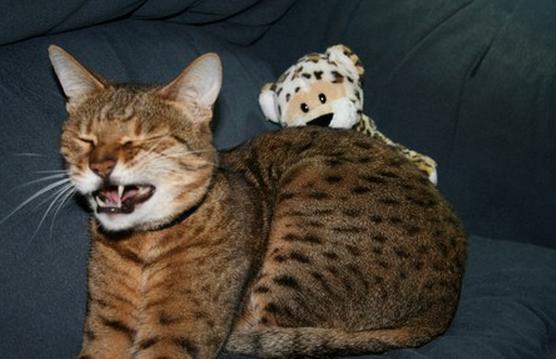 打噴嚏打一半的貓咪,好糗好可愛