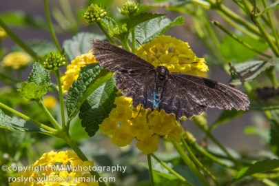 los-angeles-natural-history-museum-butterflies-060614-035-C-850px