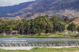 malibu-creek-state-park-052315-155-C-800px