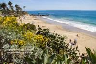 laguna-beach-042016-169-C-600px