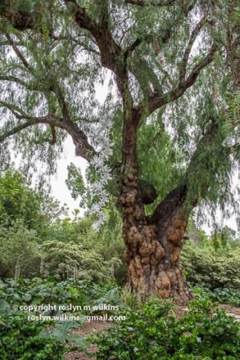 arboretum-051416-099-C-600px