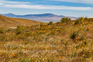 antelope-valley-poppies-041017-062-C-500px
