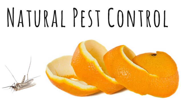 31 Natural Pest Control Methods    For Those Little