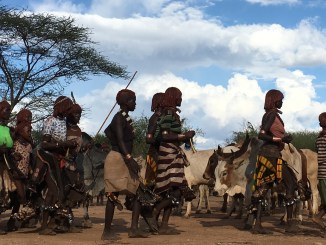 Local Ethiopian tribe moving their cattle.