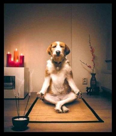 dog inner calm 2