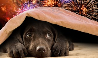3 Tips to Help Your Pets During Firework Season