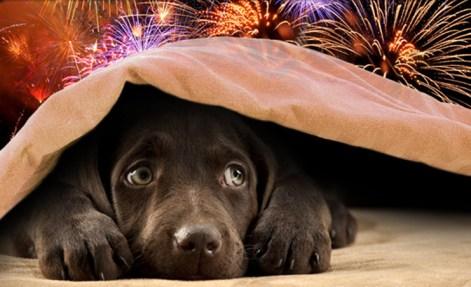 puppy scared fireworks