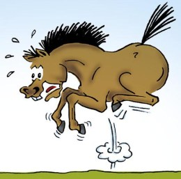 scared-horse
