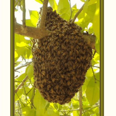 OMG – Bees!