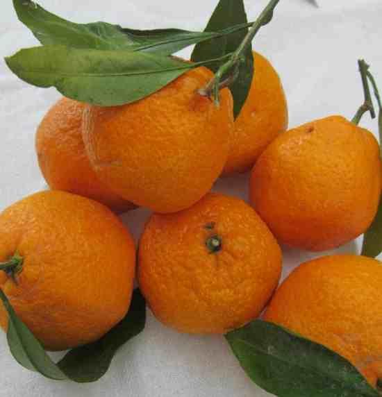 Mandrian oranges
