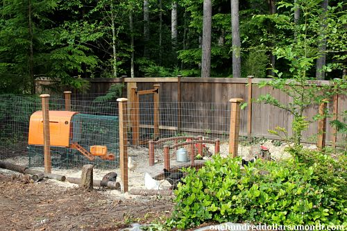 how to build a chicken yard