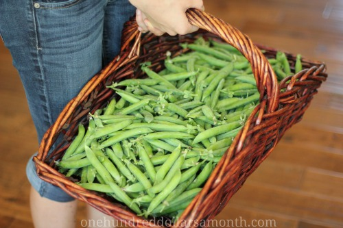 green arrow peas