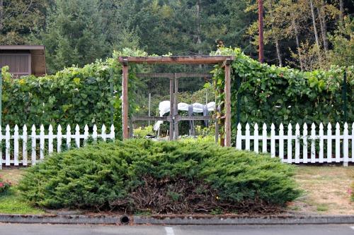 Garden Tour | St. John Bosco - Food Bank Garden Lakewood, Washington ...