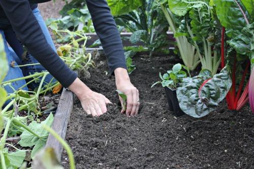 kale raised garden bed mavis butterfield