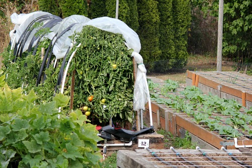 row covers tomatoes raised garden bed