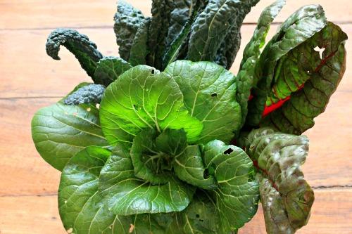 heirloom bok choy, Rainbow swiss chard, kale