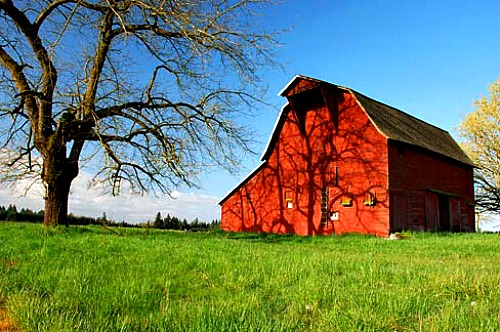 Red Barn 7