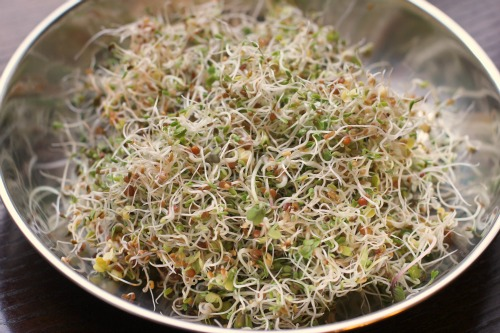 botanical interests sandwich mix seed sprouts