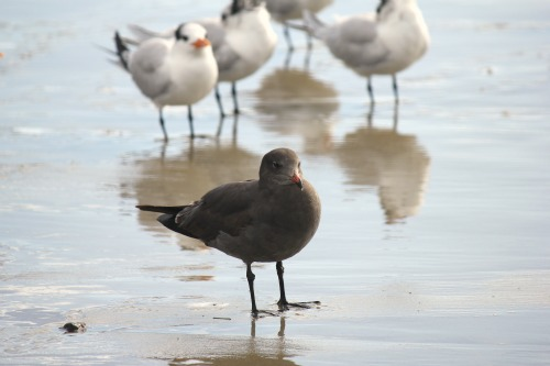 grey bird on salt creek beach