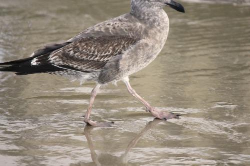 grey sea bird feet