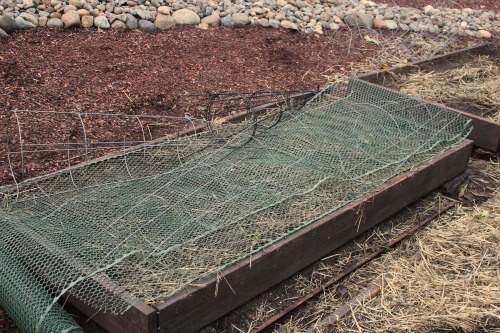raised garden beds covered with netting
