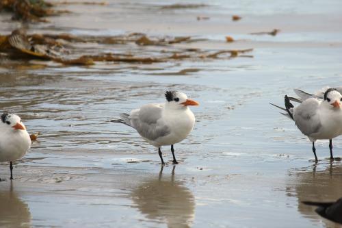 seabirds albatross