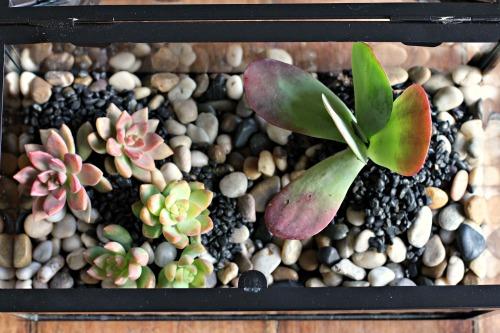 How To Create a Terrarium plants