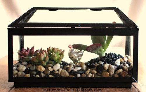 How To Create a Terrarium