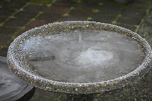 frozen bird bath