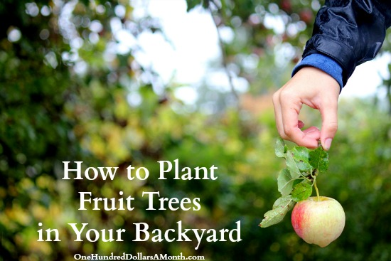How to Plant Fruit Trees in Your Backyard - One Hundred ...